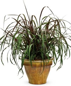 Garden Accent Plants and Grasses